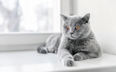 Ζωή γατίσια